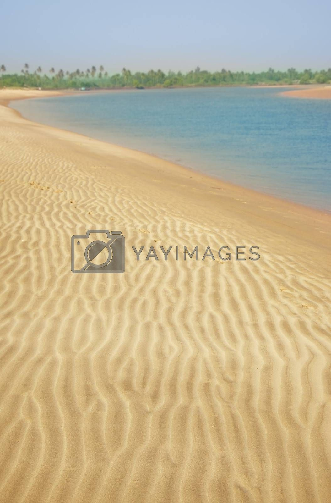 Sand beach with palms near the sea