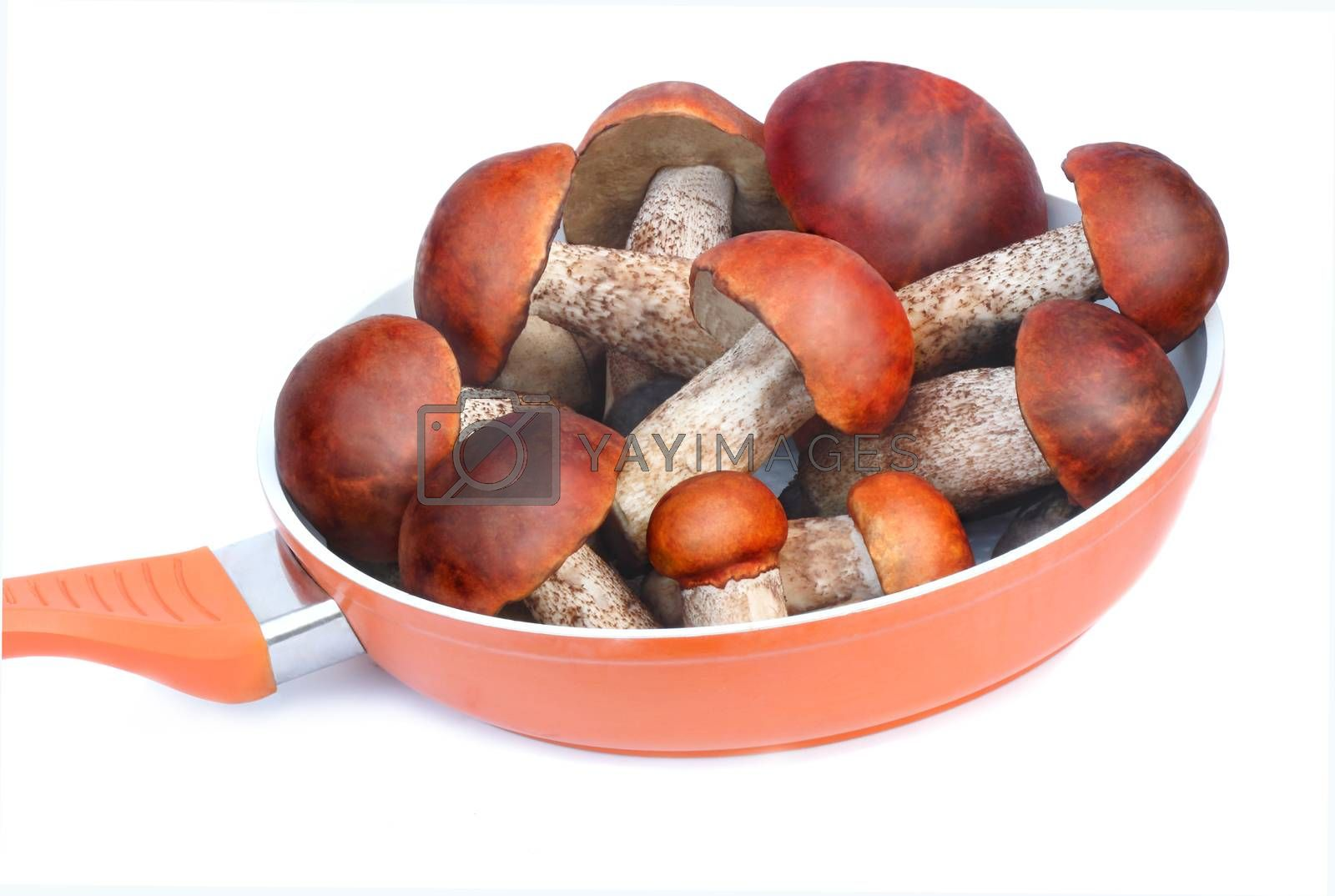 Strong, beautiful mushrooms, aspen mushrooms are in a frying pan for cooking. Presented on a white background.