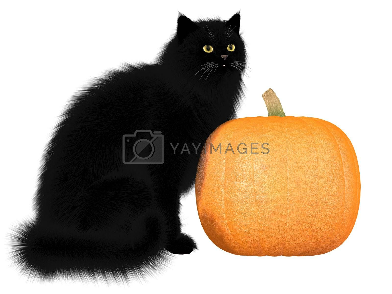 The black cat and pumpkins are a symbol of autumn seasonal Halloween festivities.