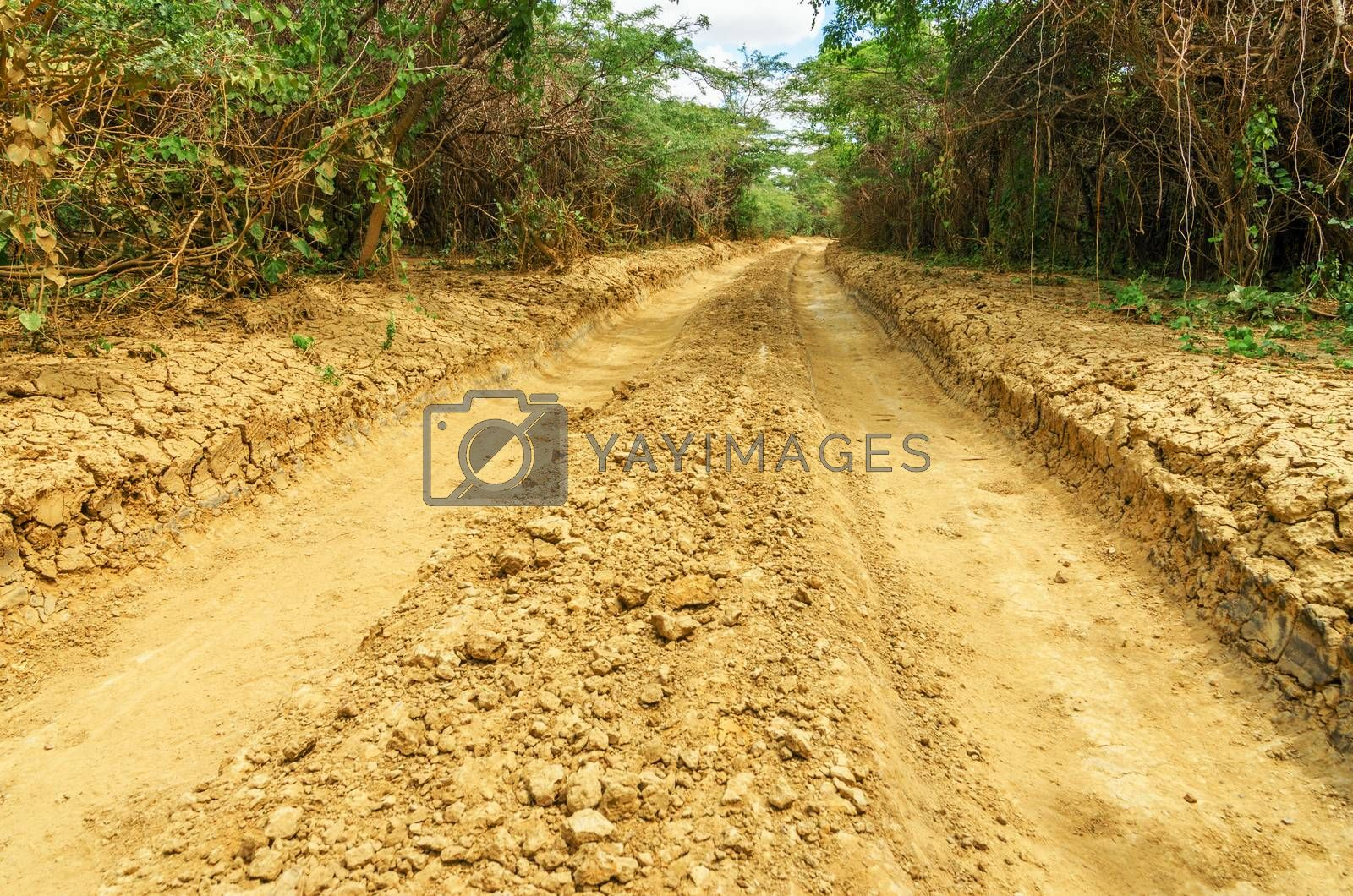 A rough dirt road passing through trees in an arid region in La Guajira, Colombia