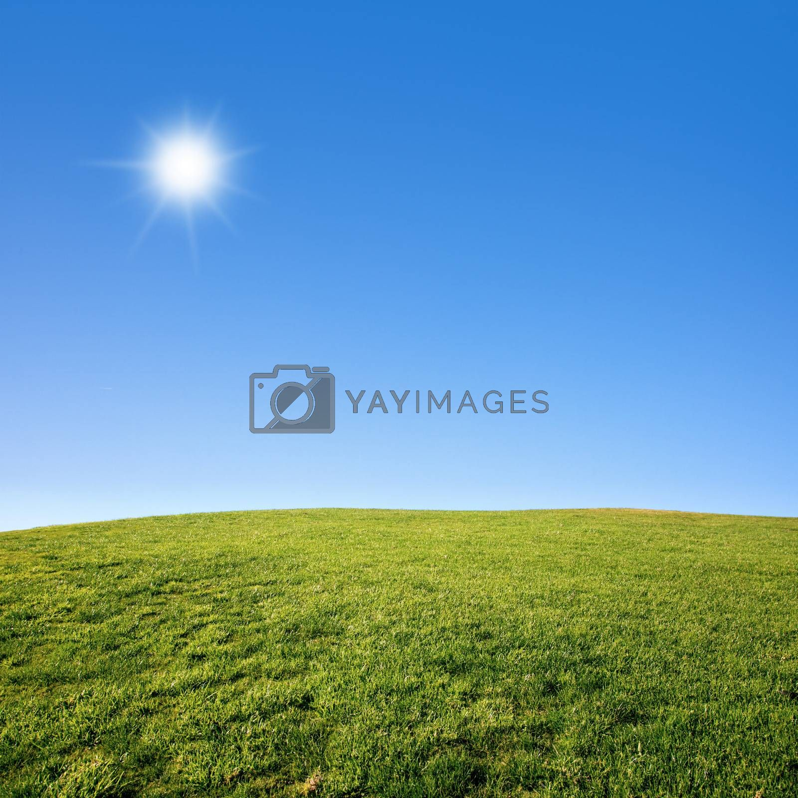 Grass Field and Blue Sky by ajn