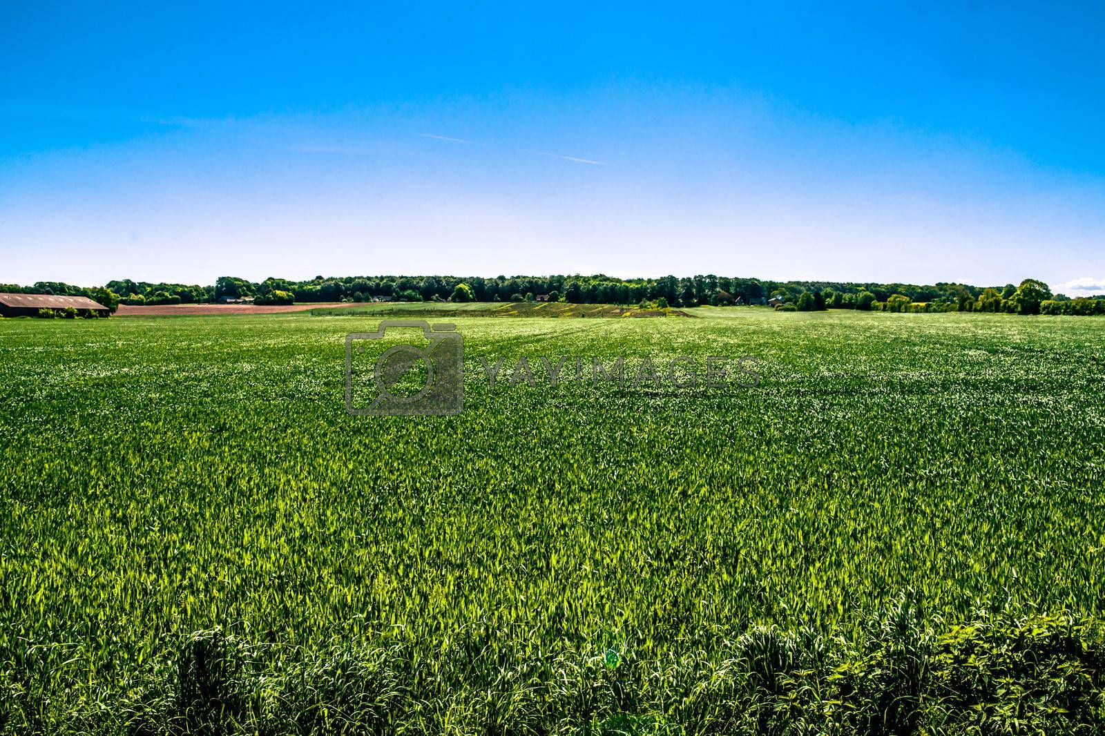 Countryside field by Sportactive