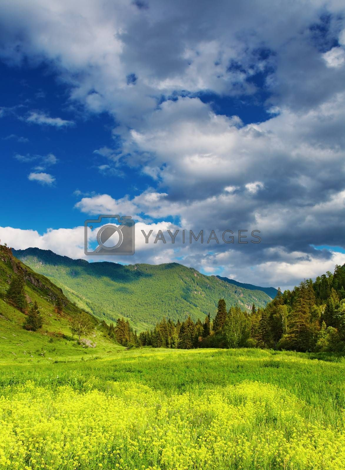 Mountain landscape with blooming glade and cloudy sky