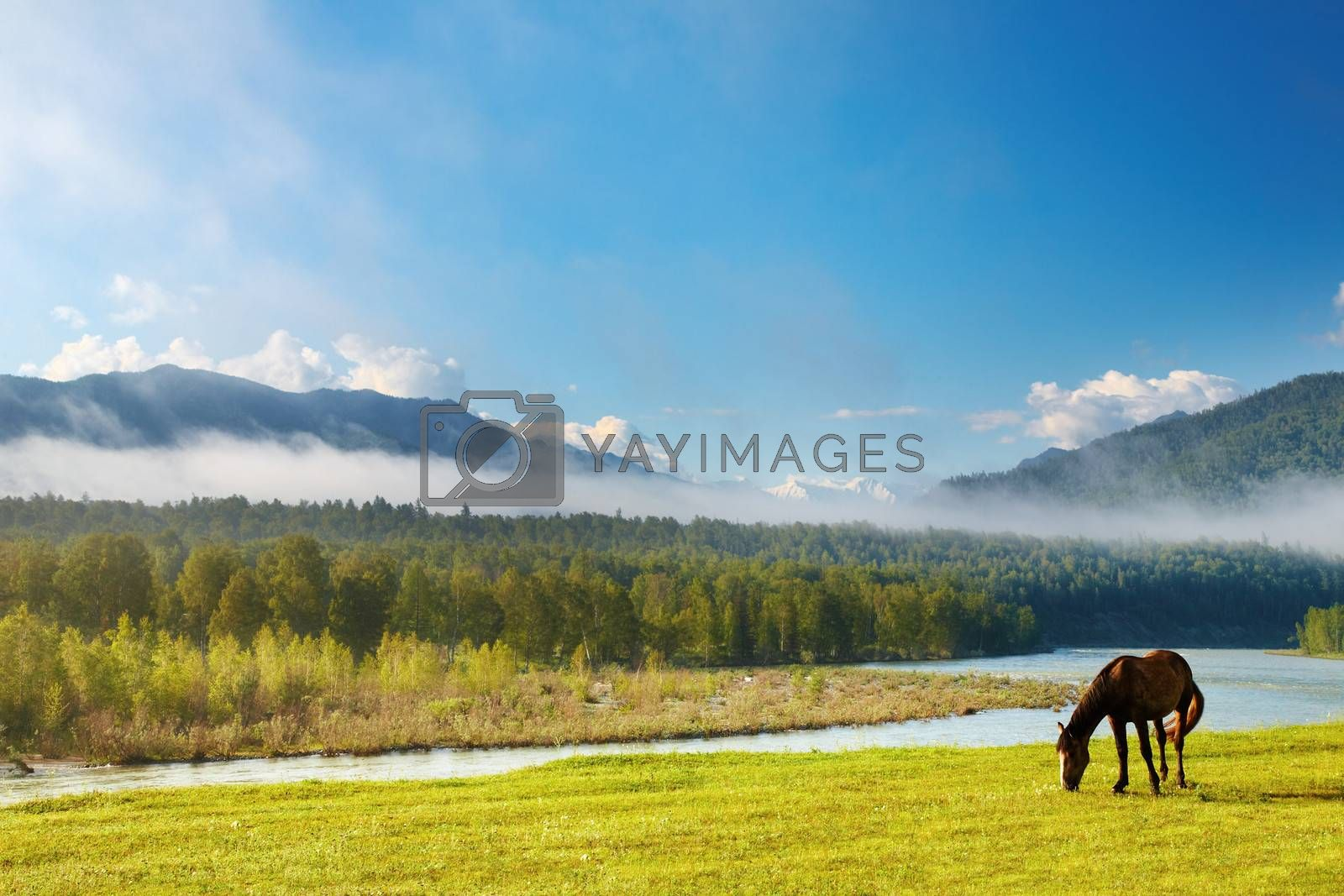 Mountain landscape with river and grazing horse