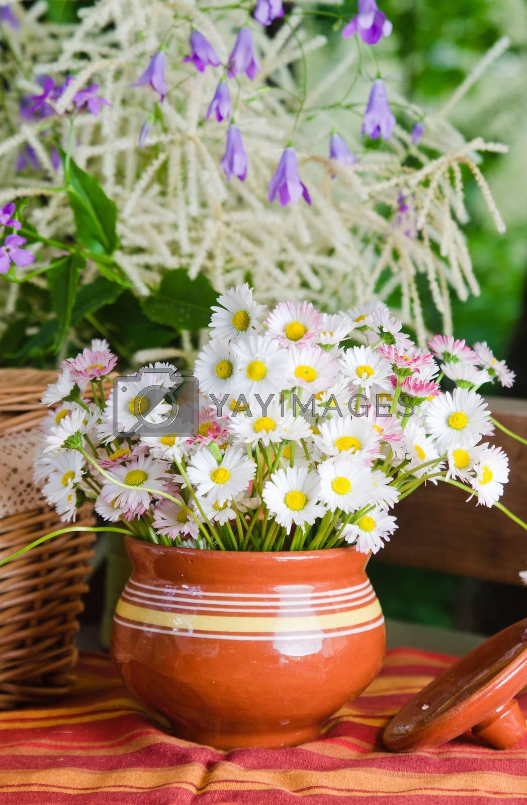 Beautiful daisy flowers, close-up. Summer background