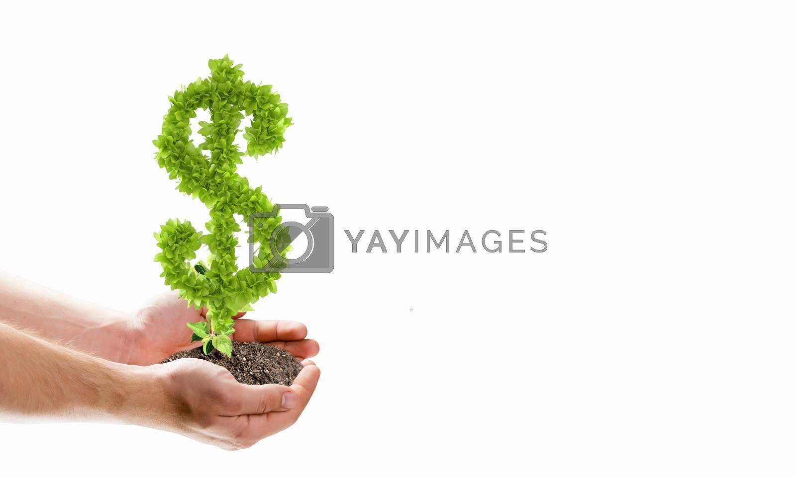 Image of human hands holding plant shaped like dollar