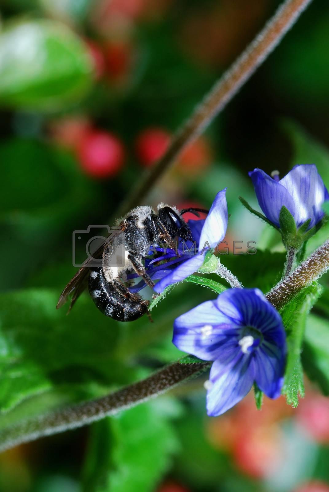 bee on blue flower in spring