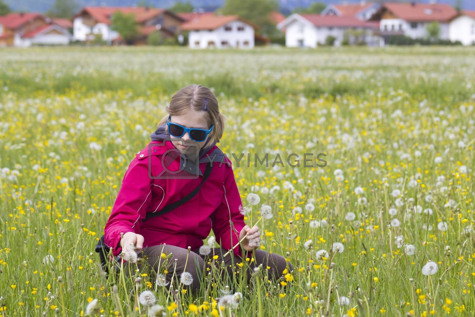 young girl on the meadow with dandelions  by miradrozdowski