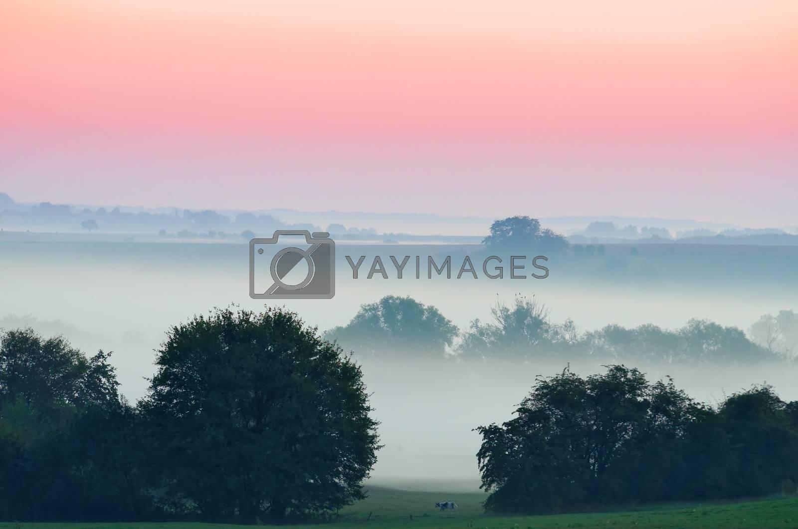 misty landscape at dawn