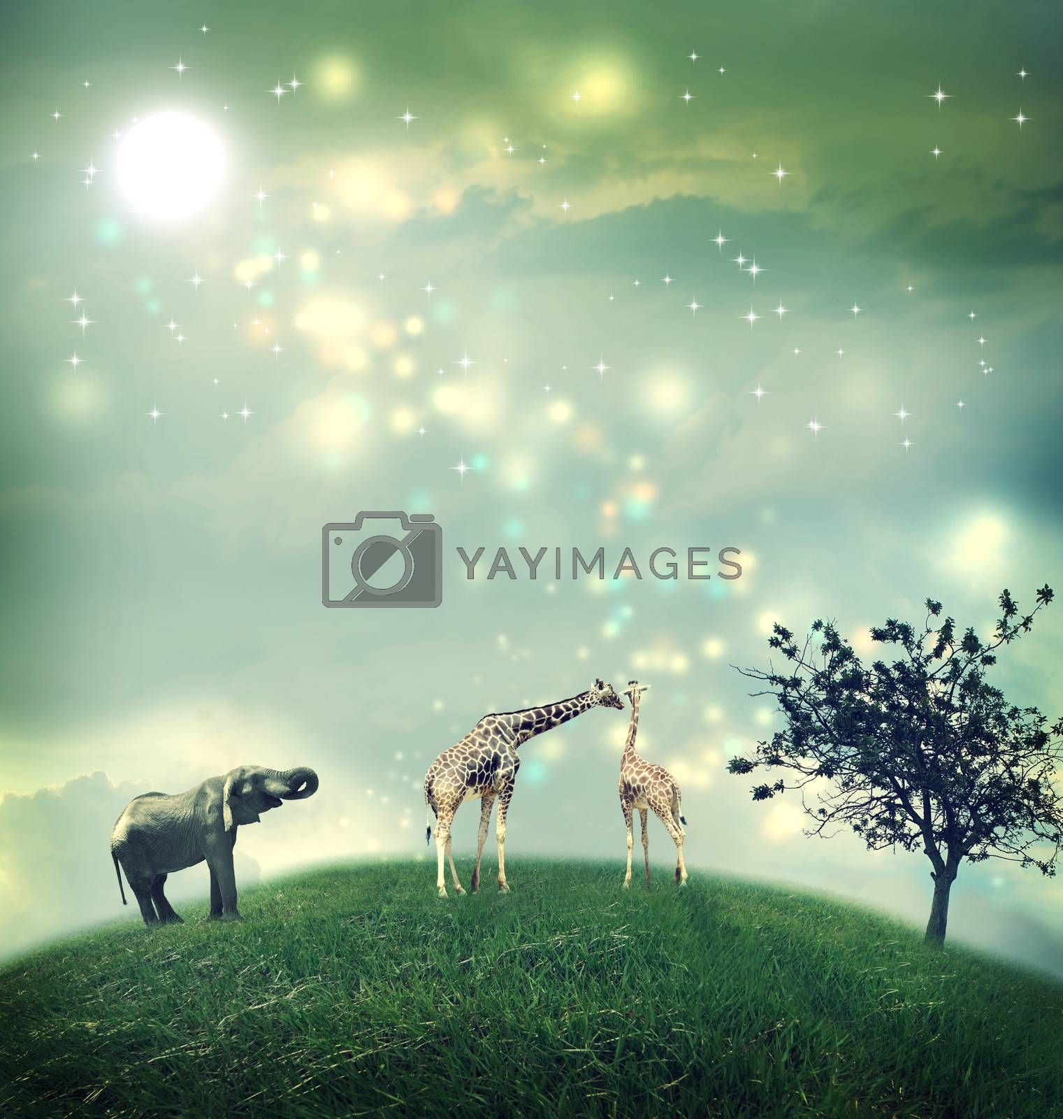 Royalty free image of Giraffes and elephant on a hilltop  by melpomene
