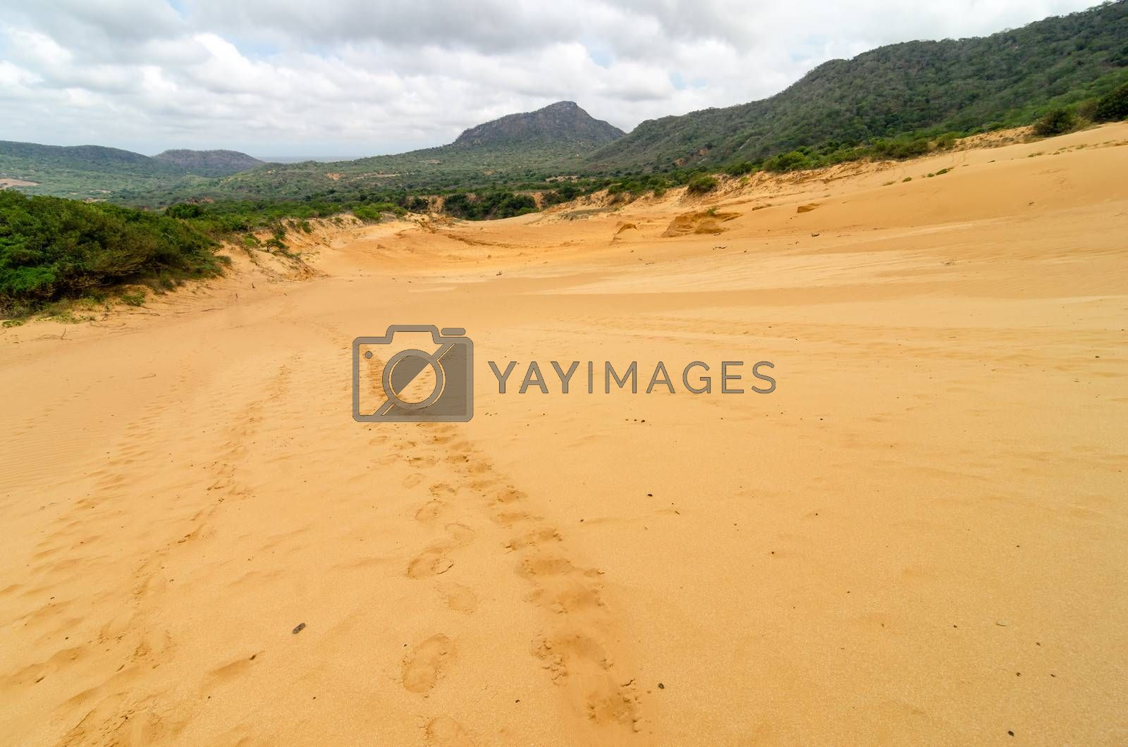 Footprints going up a sand dune in Macuira National Park in La Guajira, Colombia