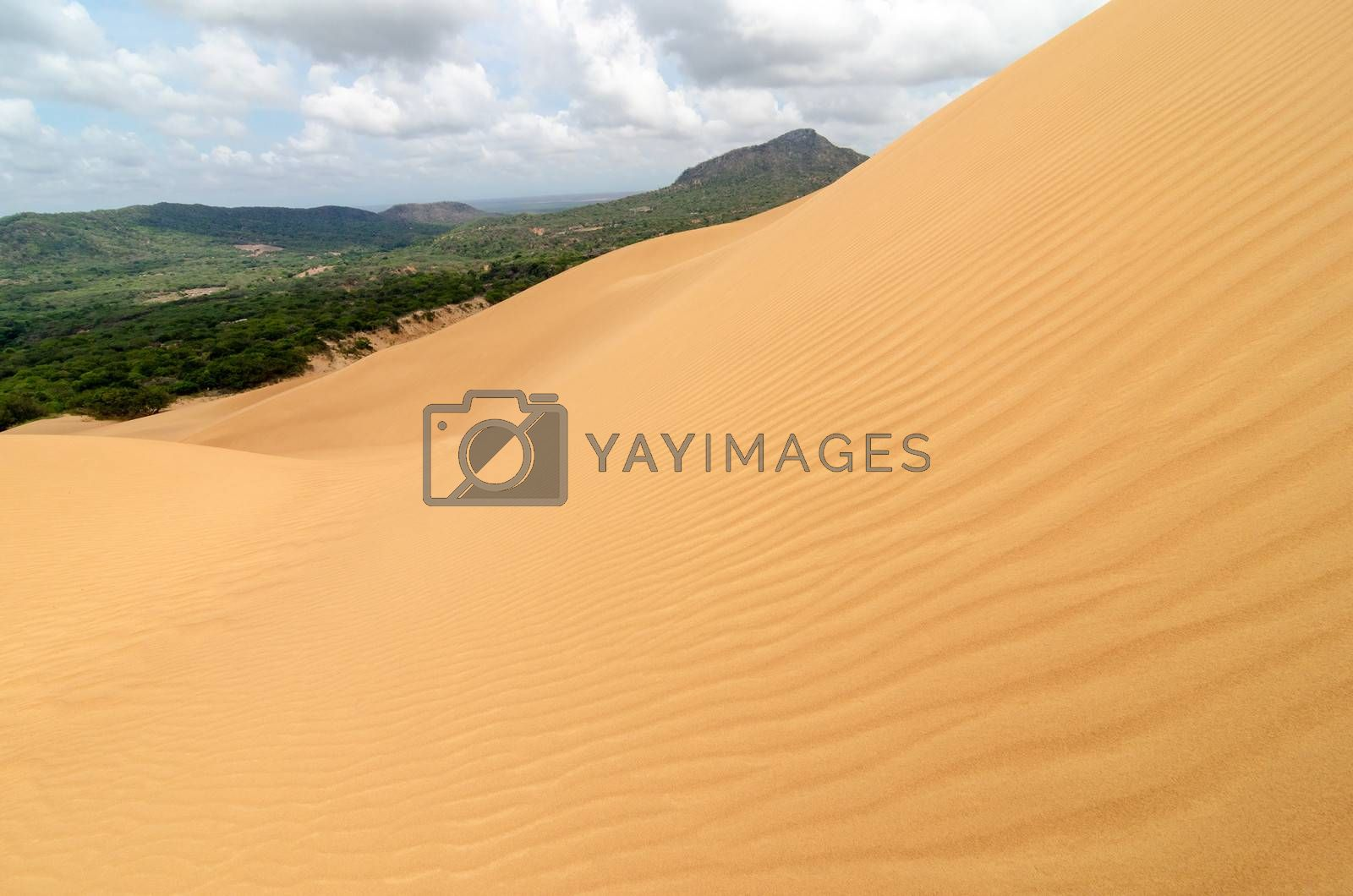 Ripples on a sand dune with a green forest in the background