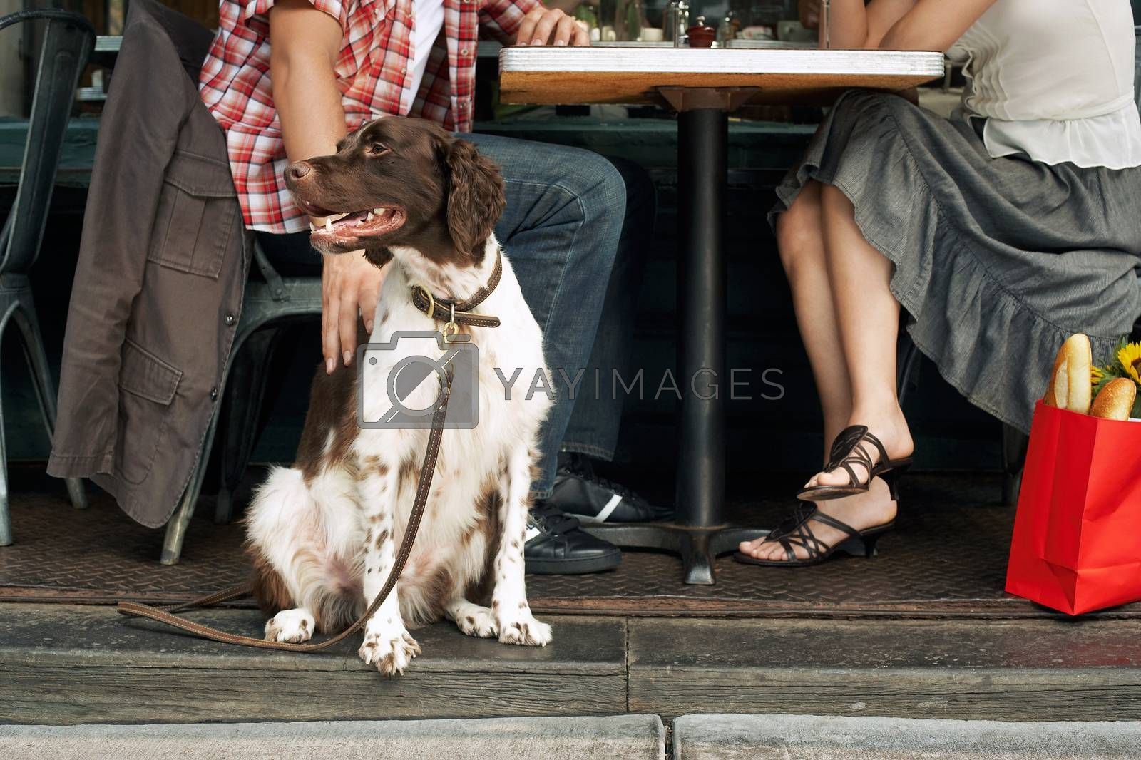Couple Sitting With Dog At Restaurant