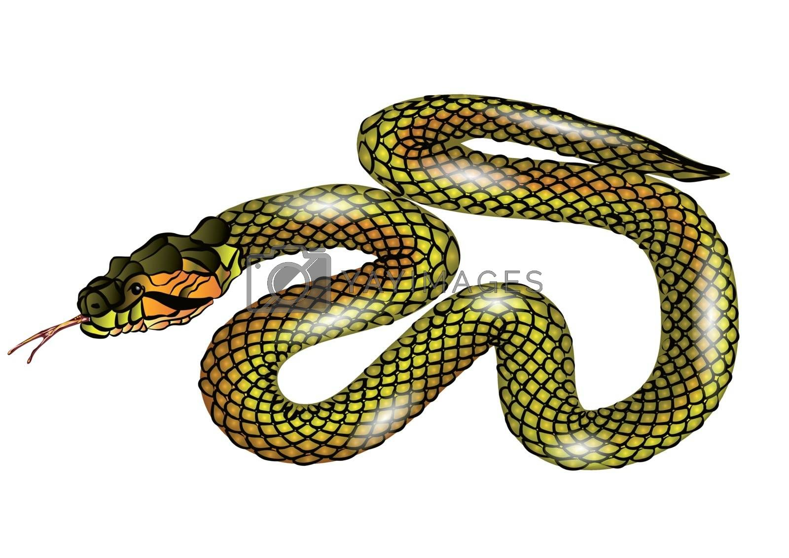 snake isolated on white background. 10 EPS