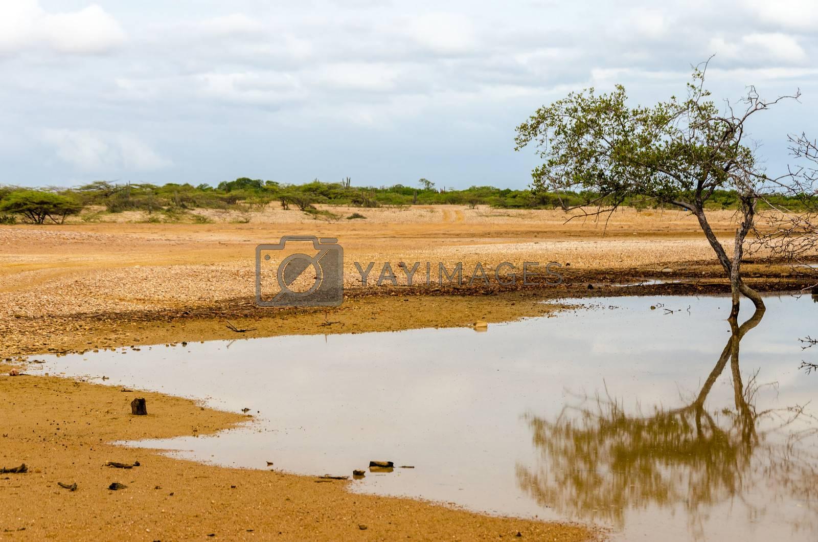 Tree reflected in water in a desert in La Guajira, Colombia