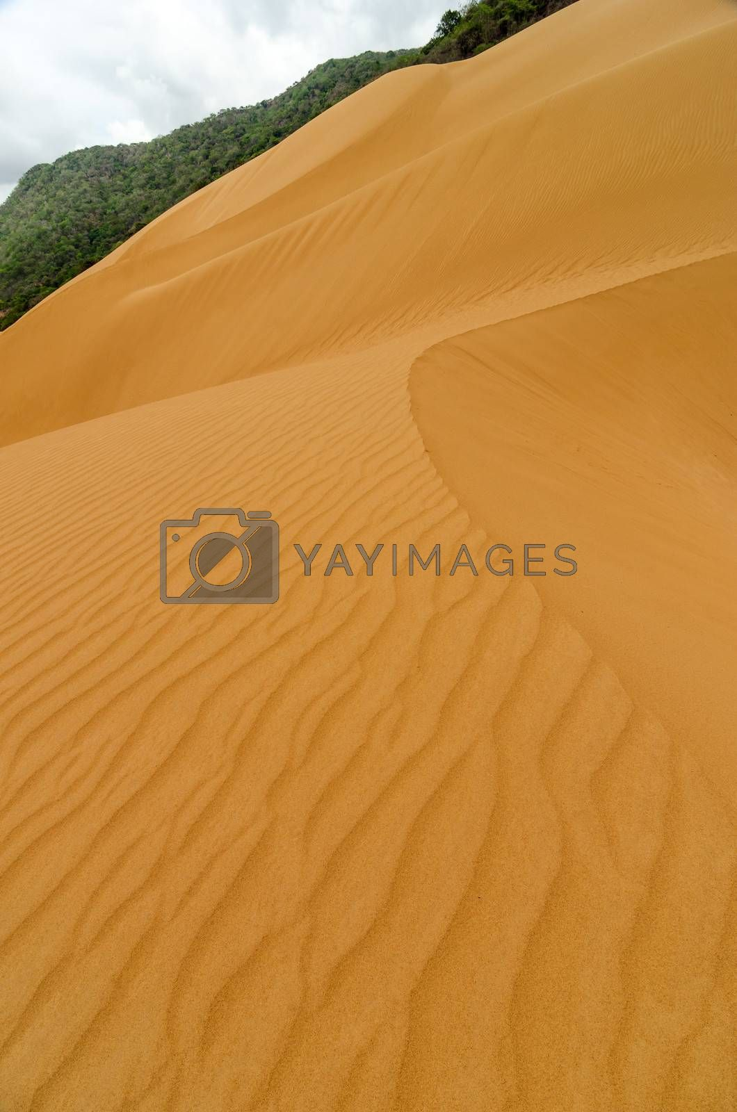 Vertical sand dune view in Macuira National Park in La Guajira, Colombia