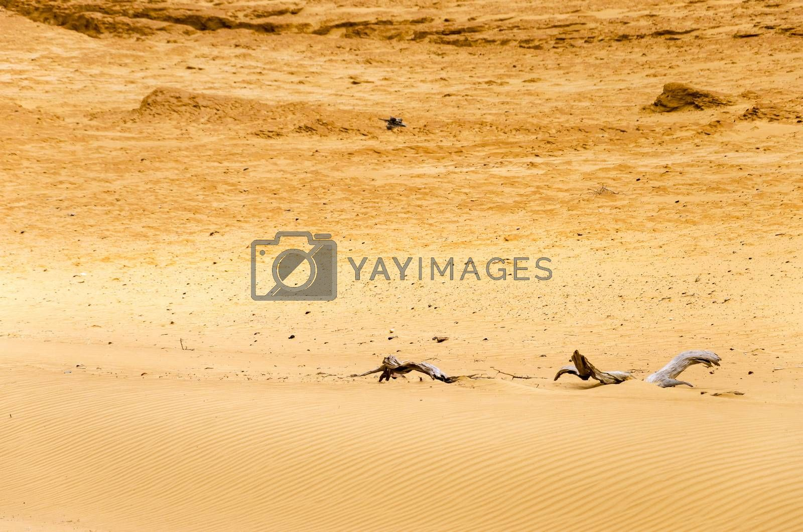 Dry sandy desert with wood from dead trees