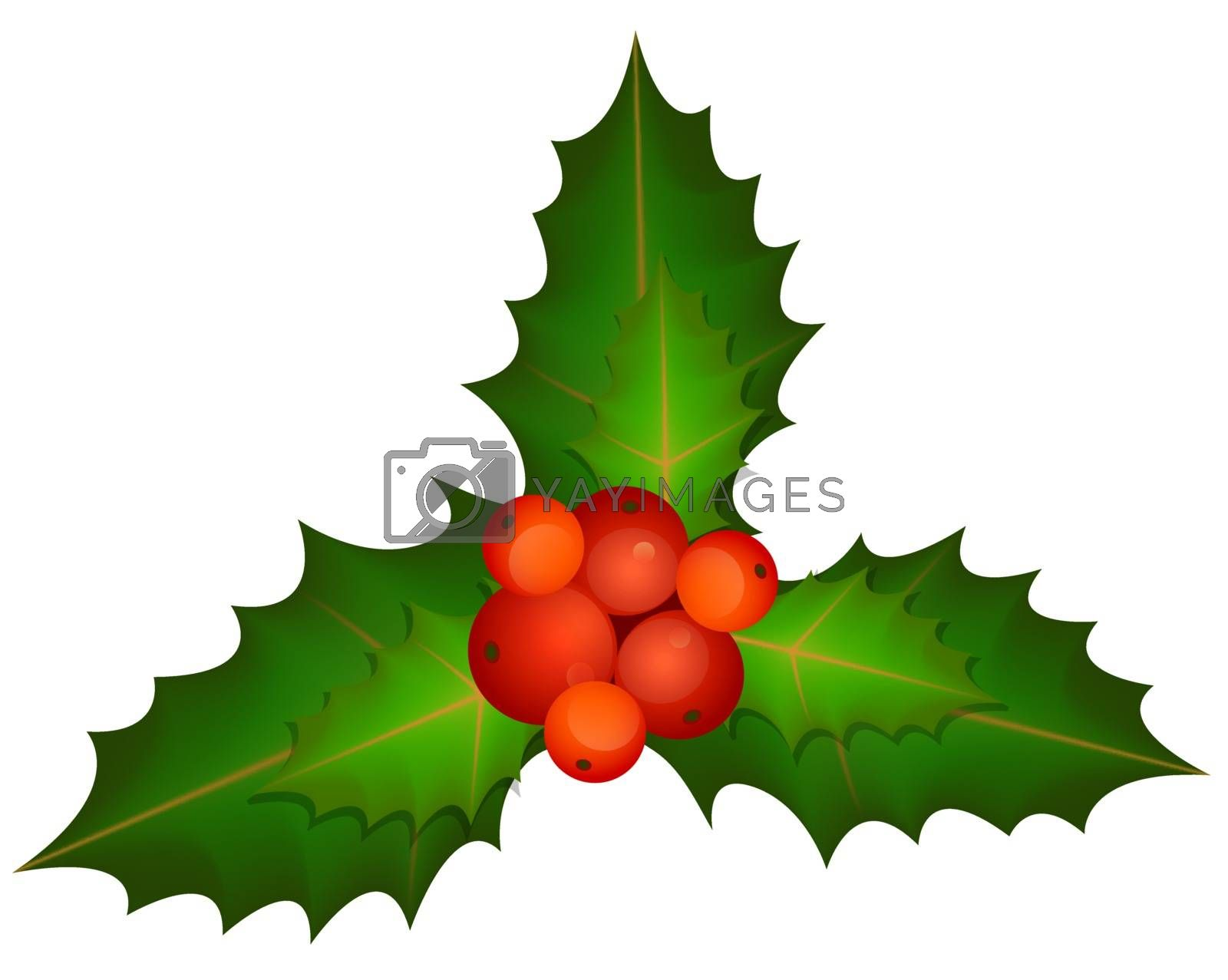 Spring Of Christmas Holly - Vector Illustration