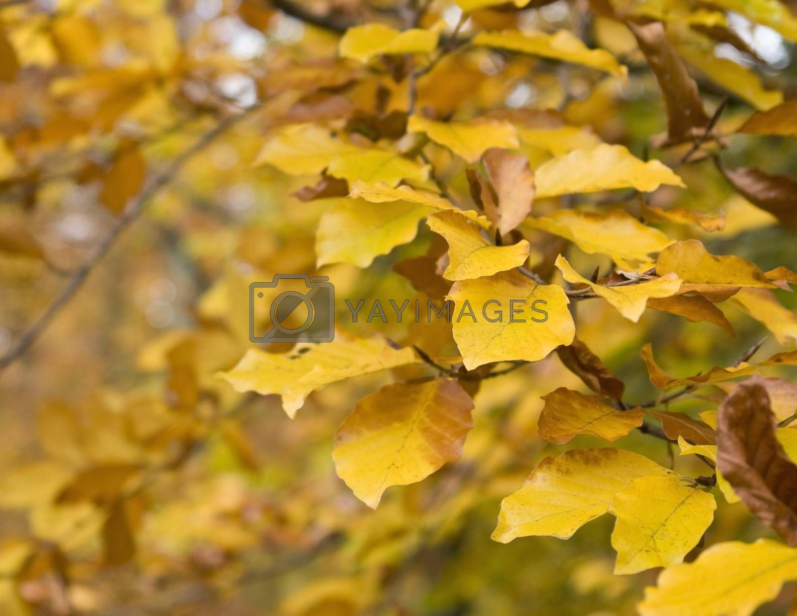 natural brown autumn leaves and twigs in blurry back