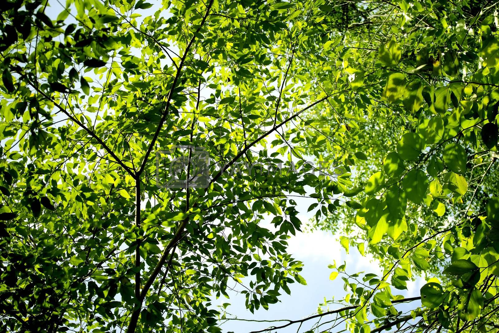 Fresh green leaves forming natural background