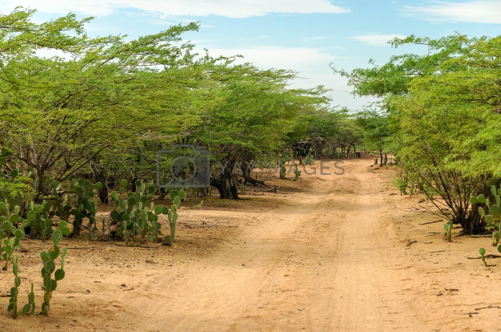 Dirt road passing through and arid region in La Guajira, Colombia