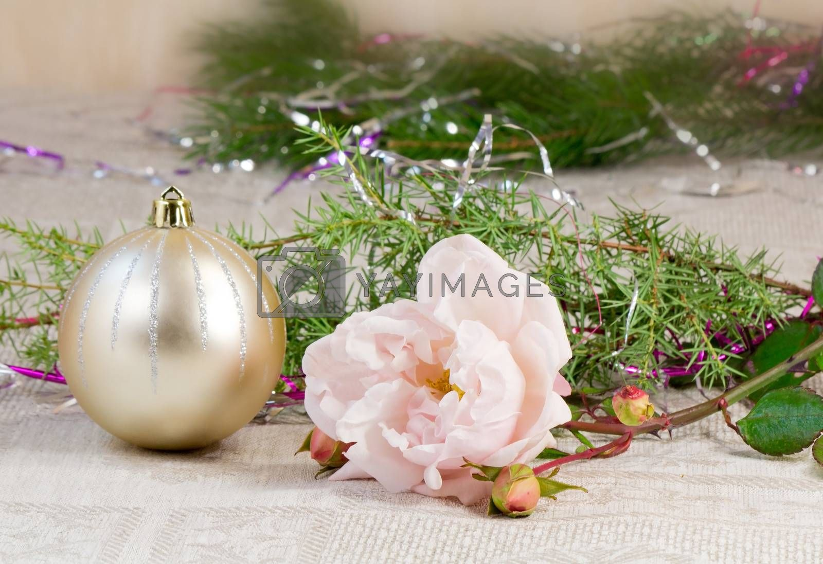 Beautiful shiny white ball , rose and branches of a Christmas tree ornament.