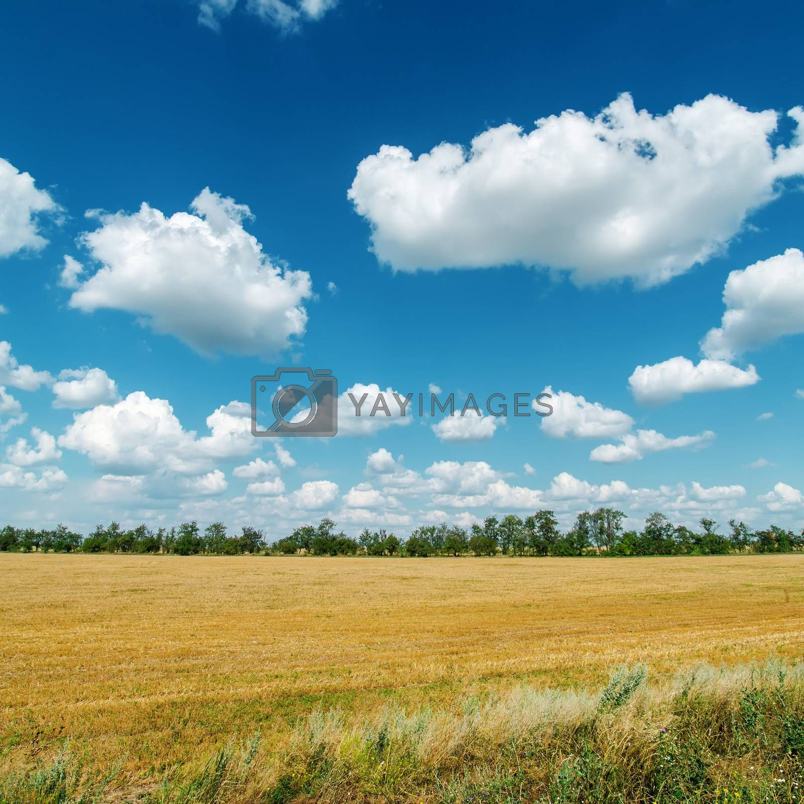 rural landscape under cloudy sky