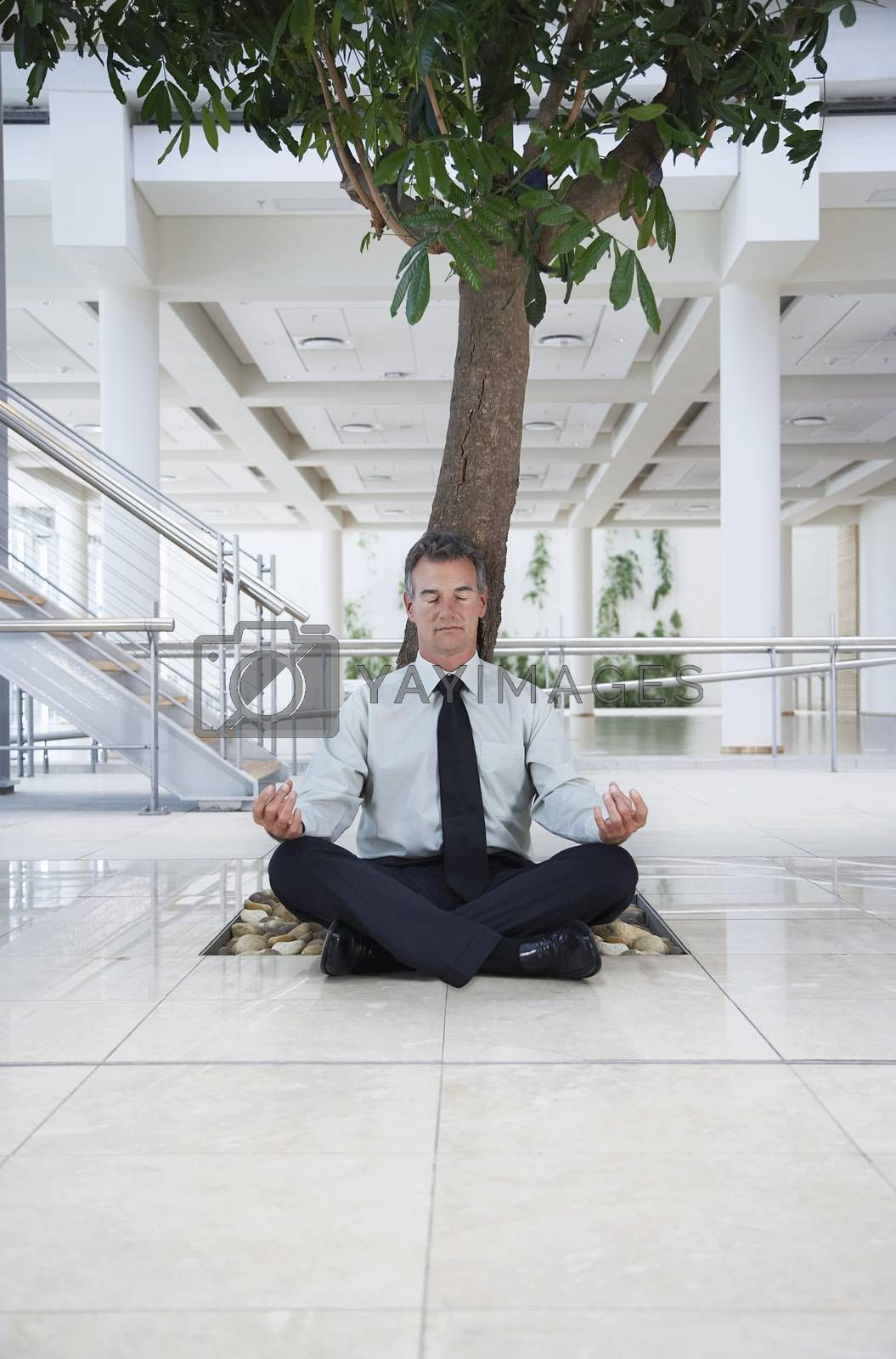 Businessman Meditating Under Tree