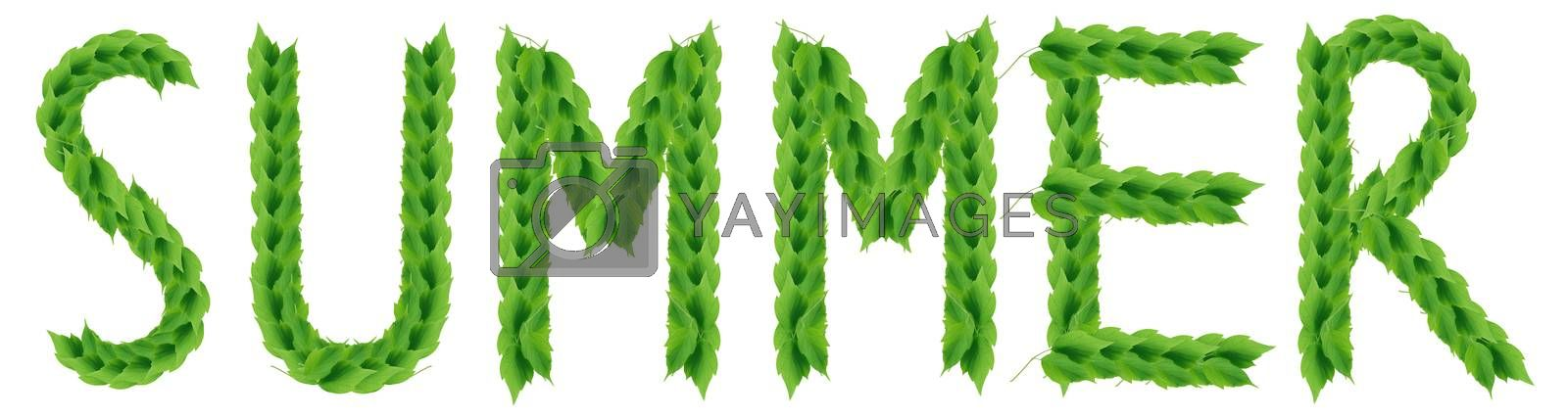 Word SUMMER made from green leaves on white background