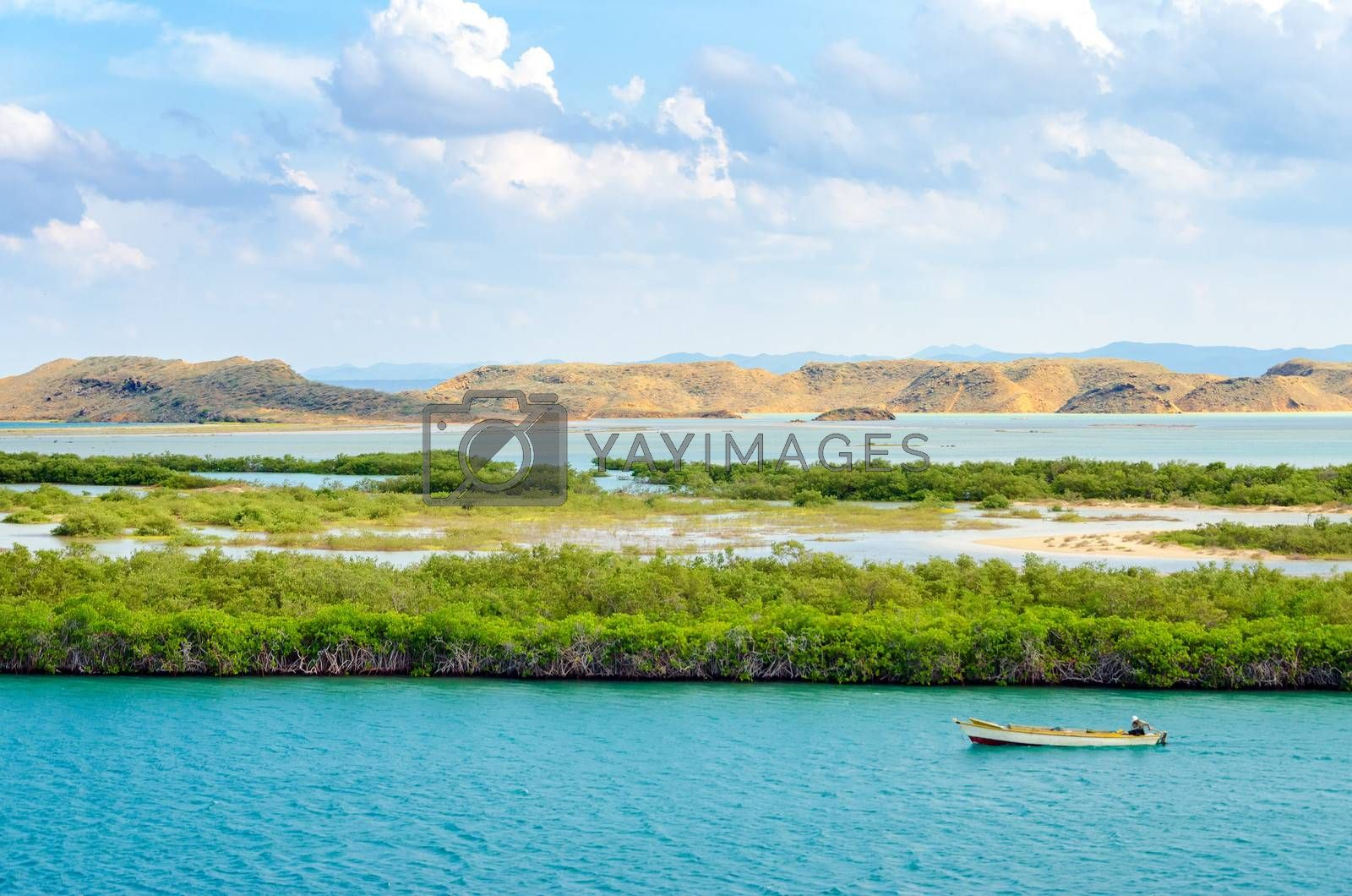 Boat passing by mangrove trees in the Caribbean Sea