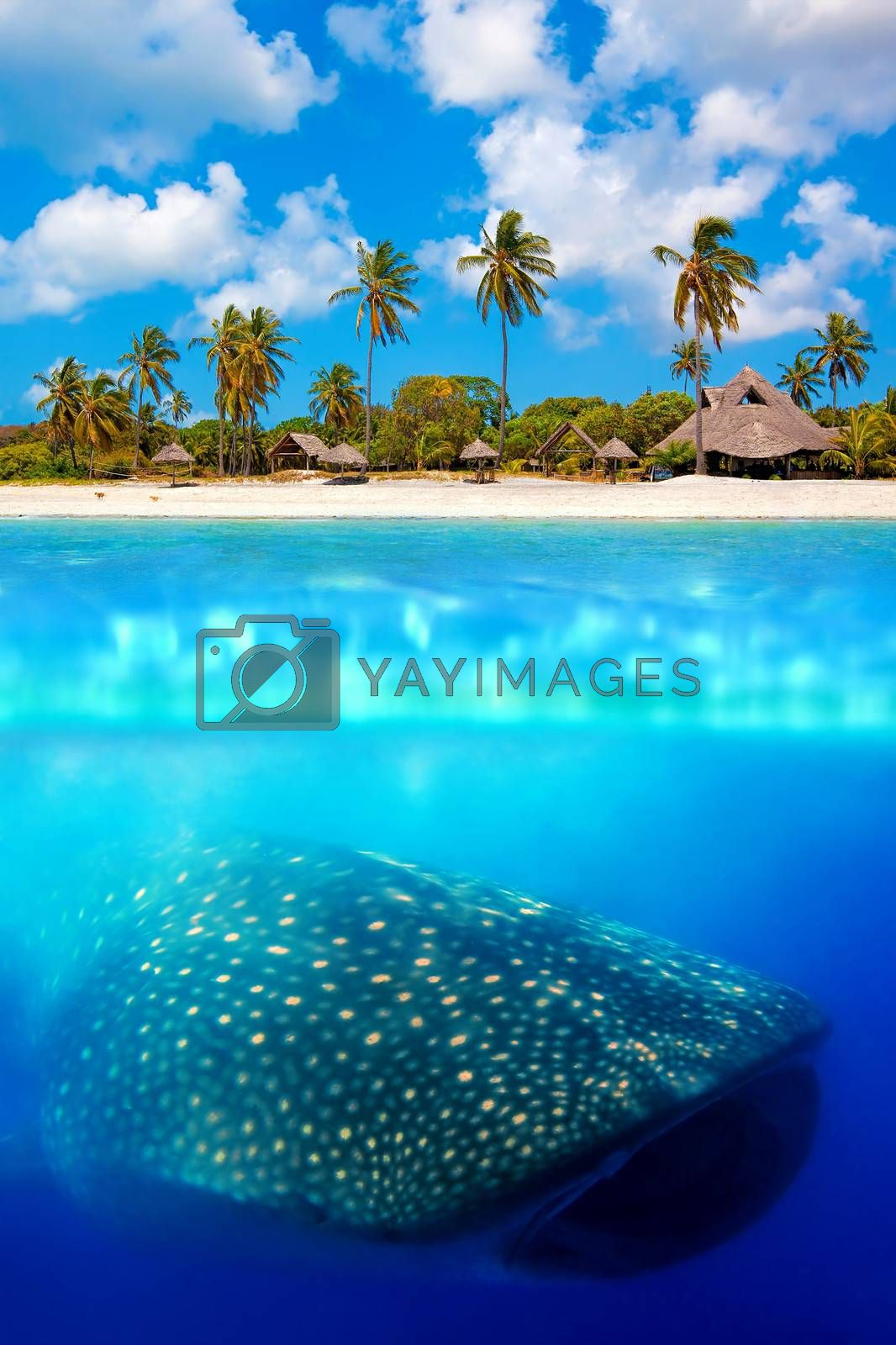 Tropical island and whale shark - above and below water