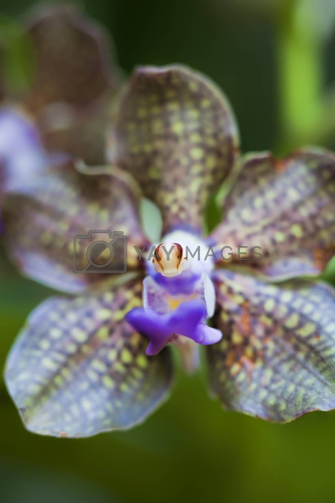 Close-up of a blooming orchid flower looking like an alien