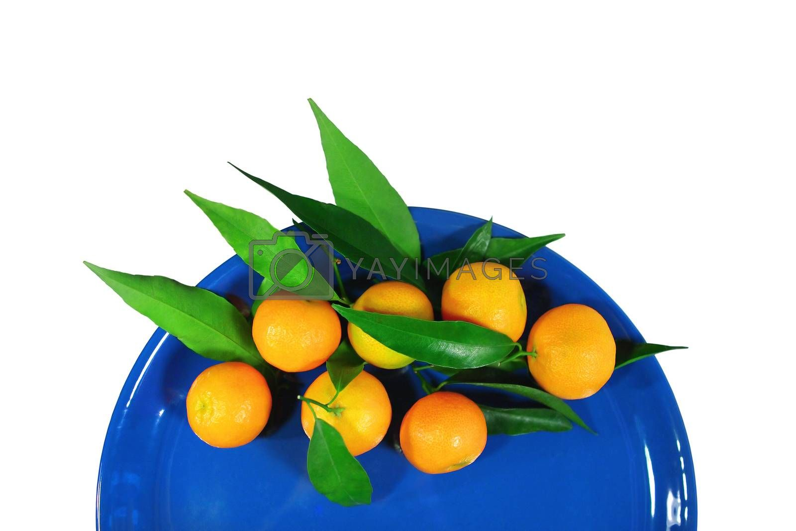 Mandarins on a dark blue plate - isolated object white background