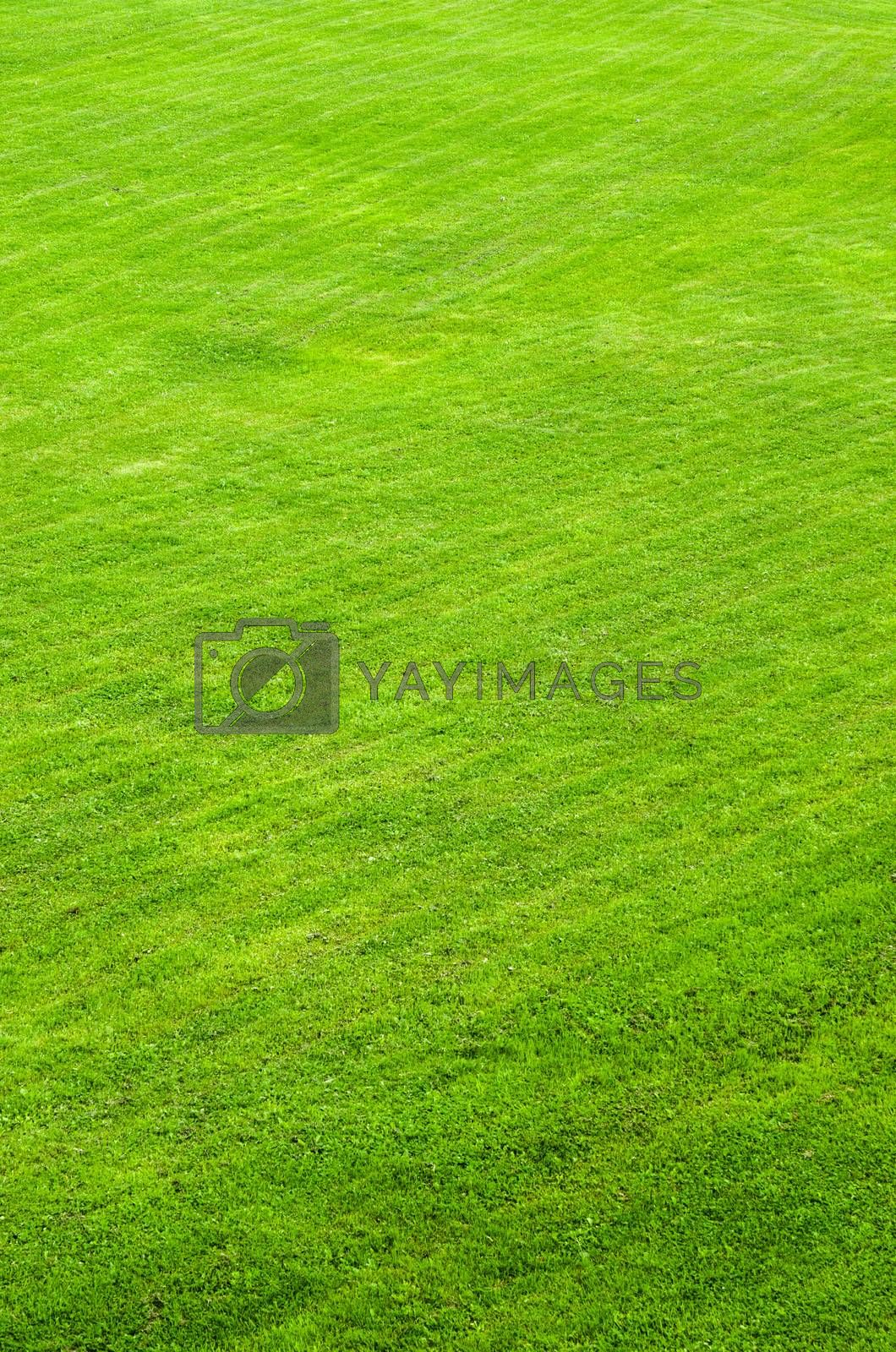 trimmed green lawn, a background