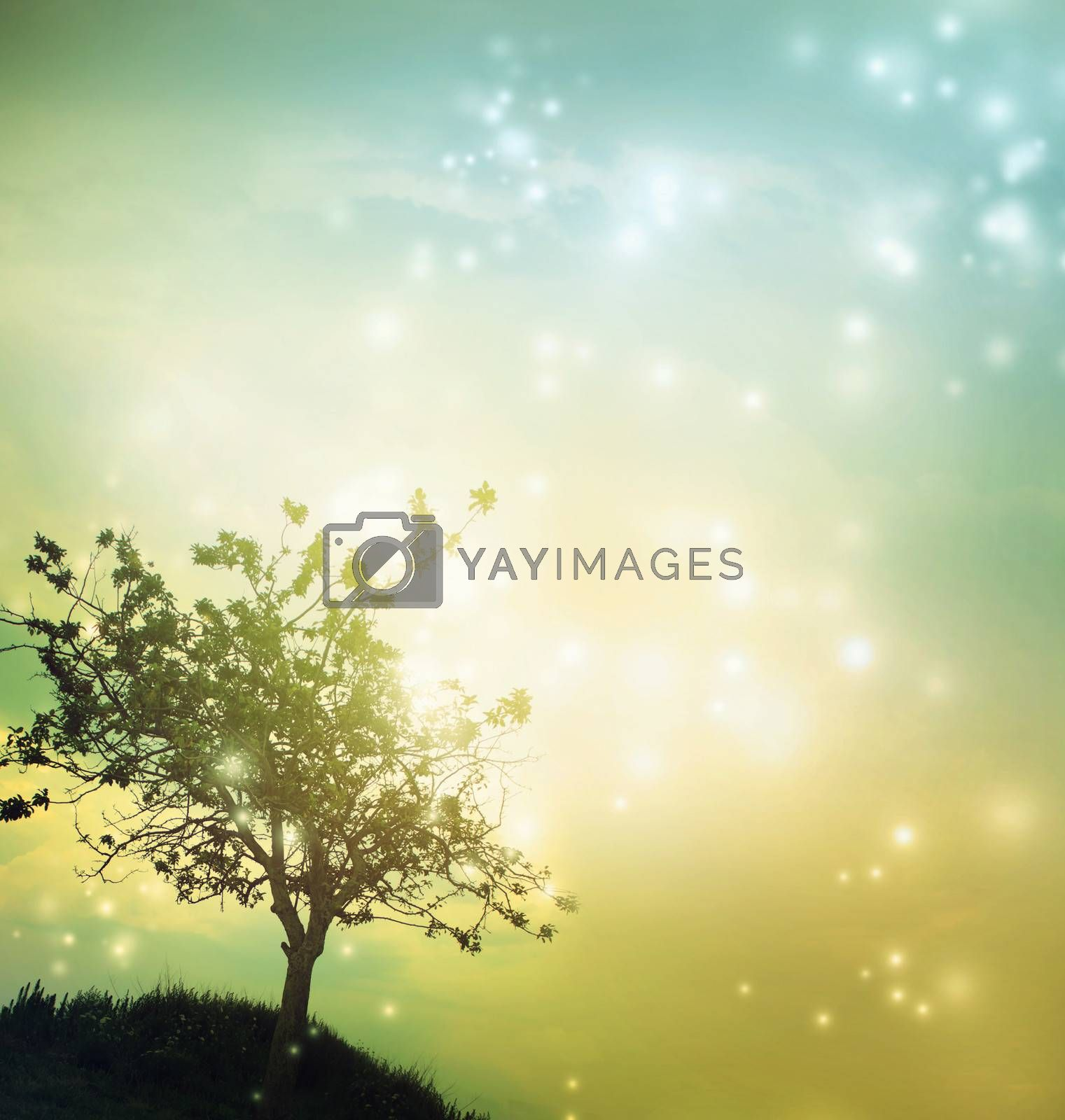Royalty free image of Tree silhouette at twilight by melpomene