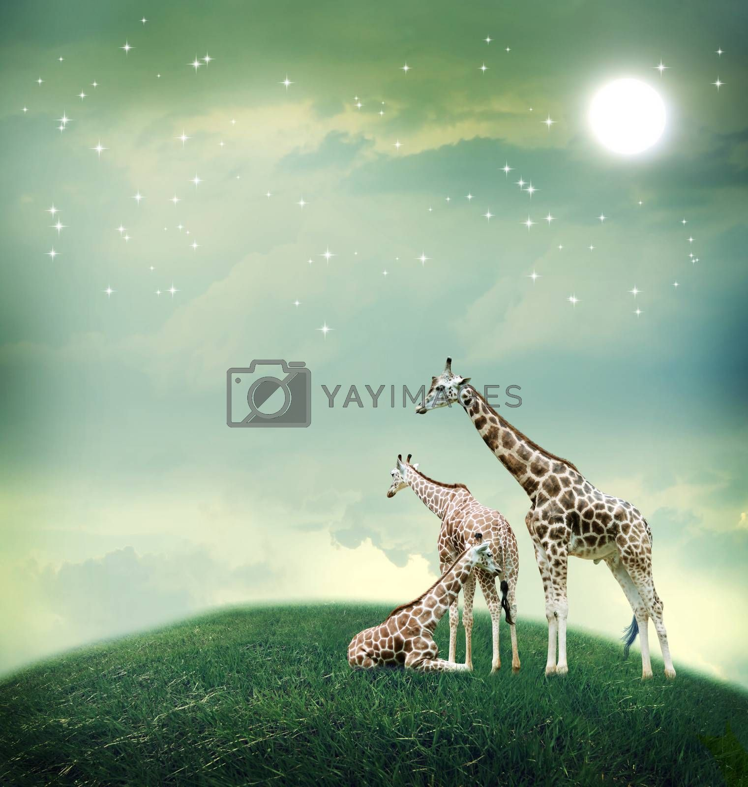 Royalty free image of Three giraffes on the fantasy landscape by melpomene