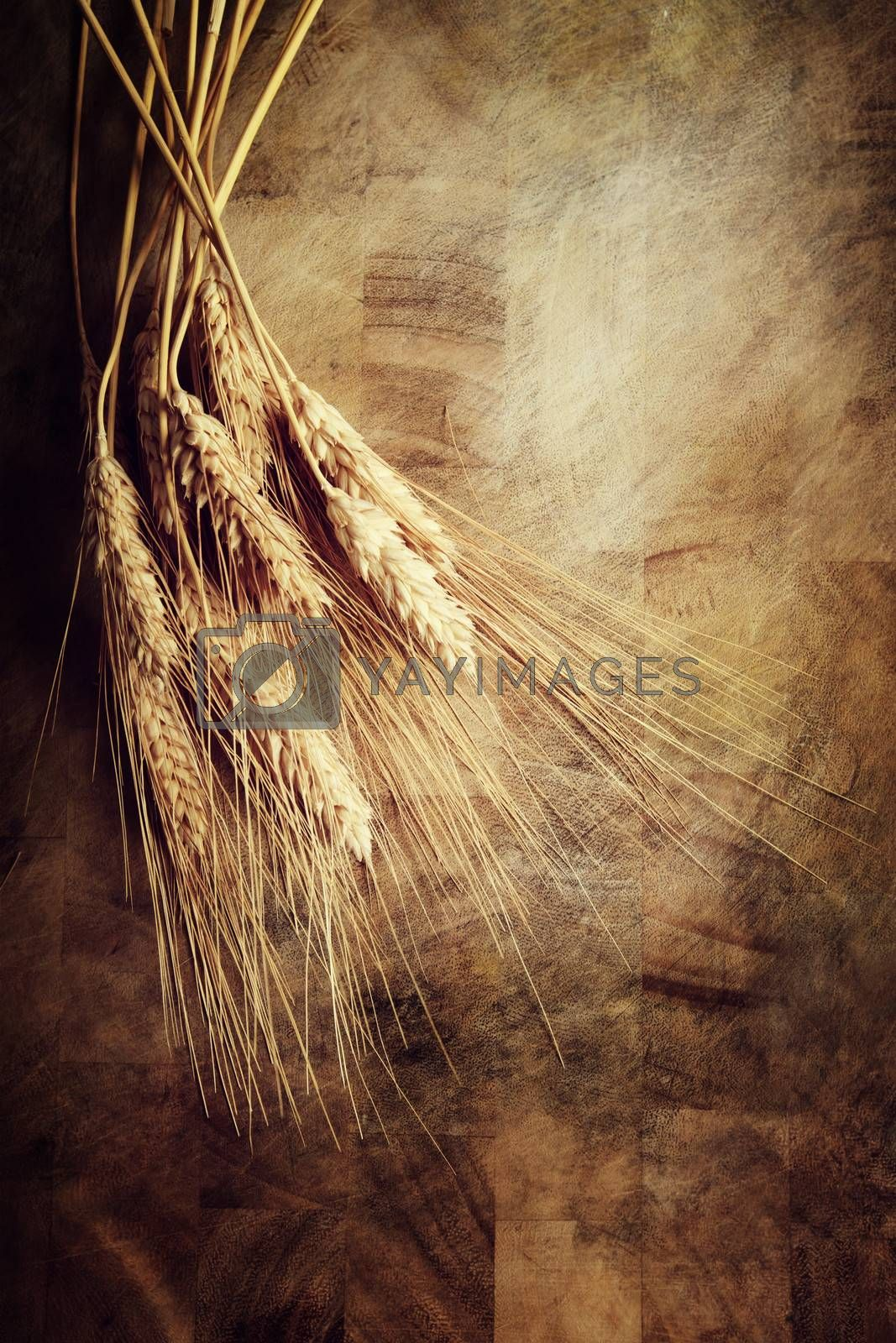 Royalty free image of Ears of wheat  by melpomene