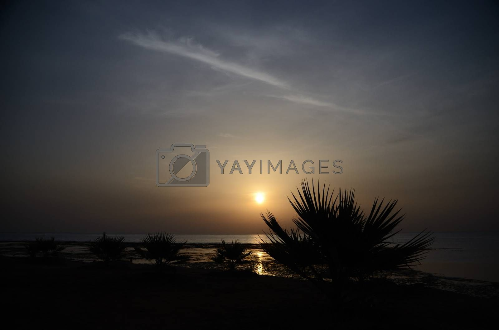 many small palm trees at sunrise on the sea