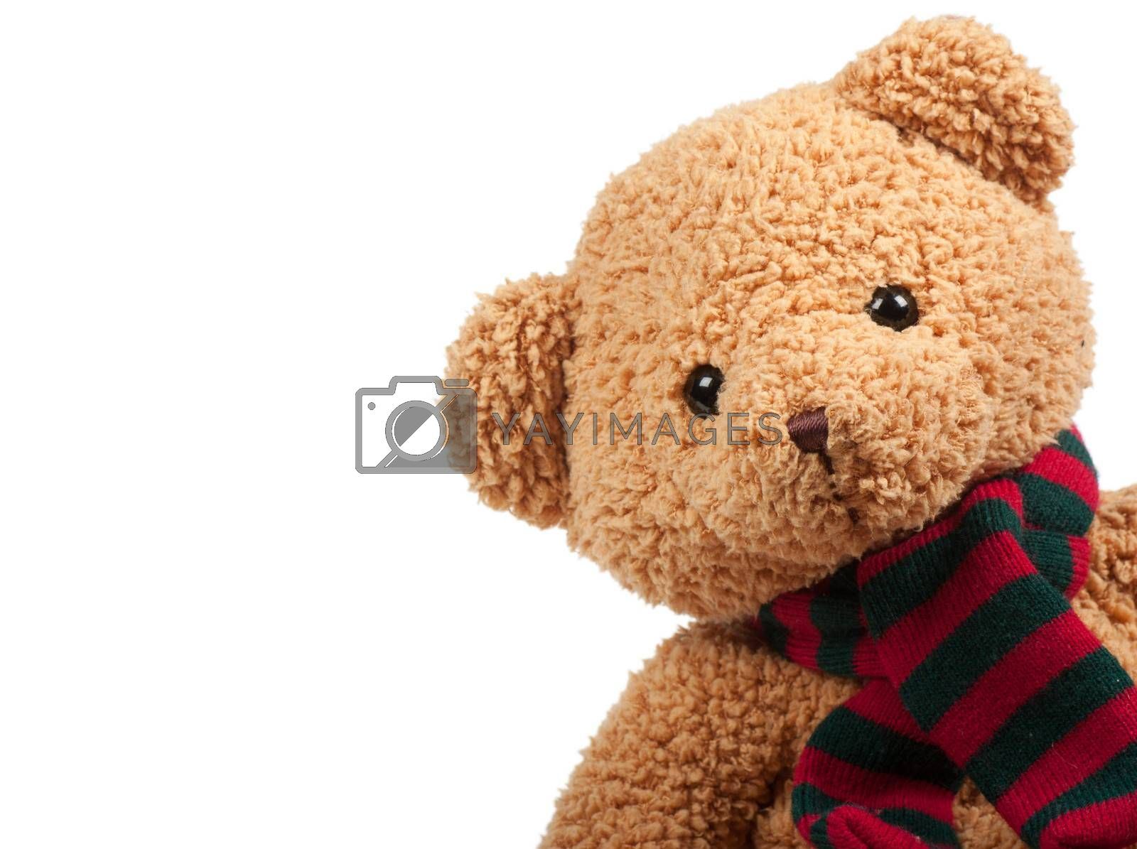 Fluffy teddy bear over the white background