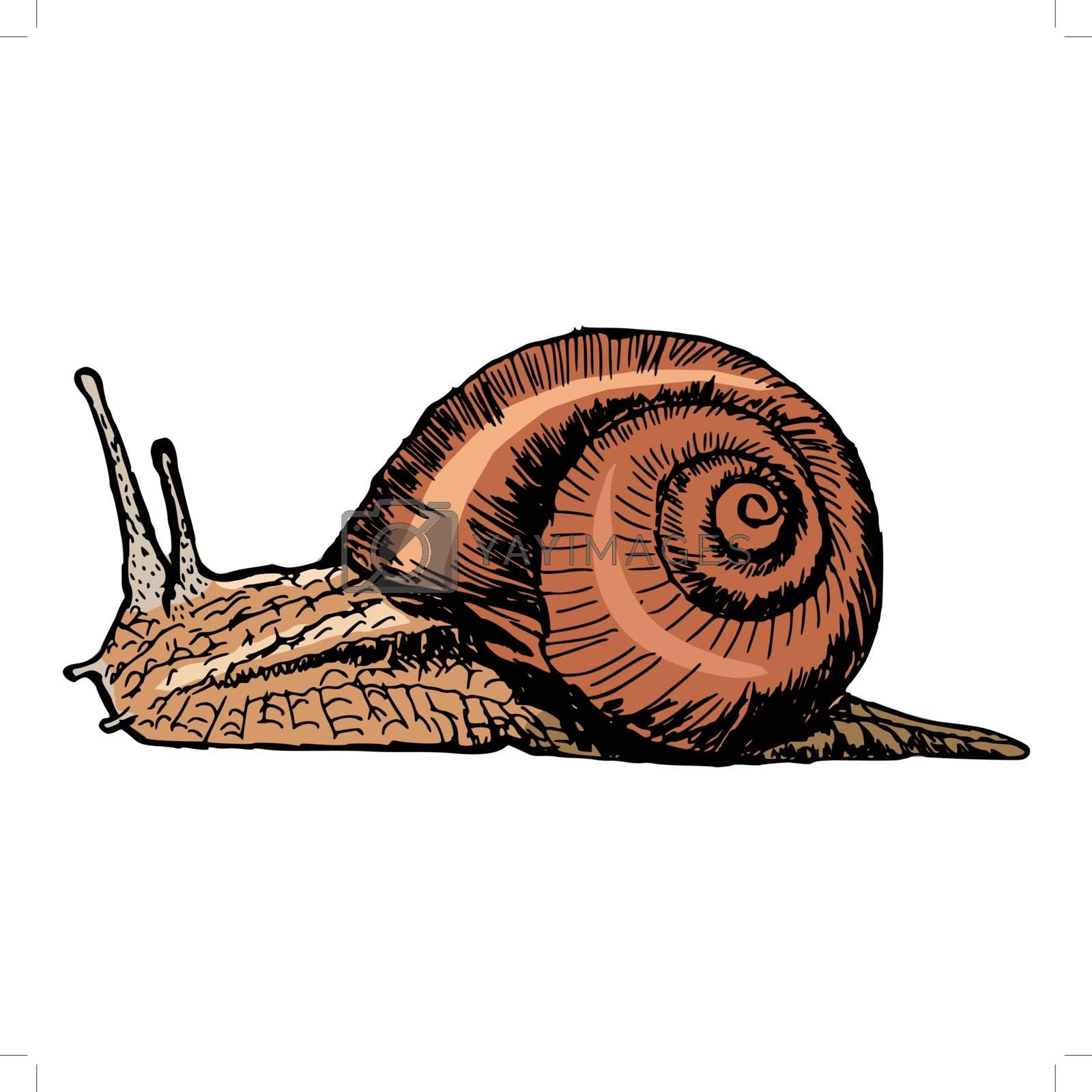 hand drawn, sketch, cartoon illustration of snail