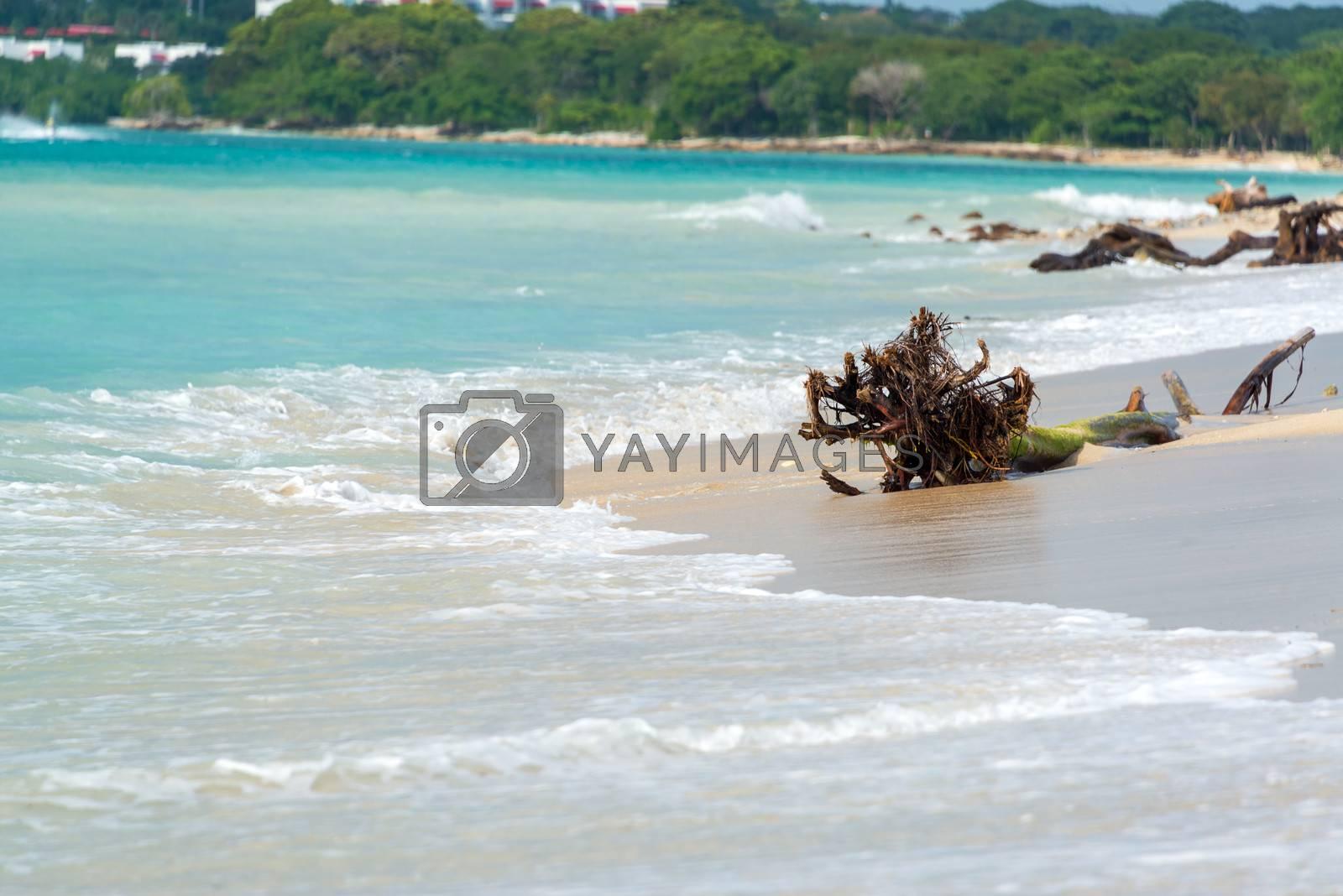 Royalty free image of Beach at Playa Blanca by jkraft5