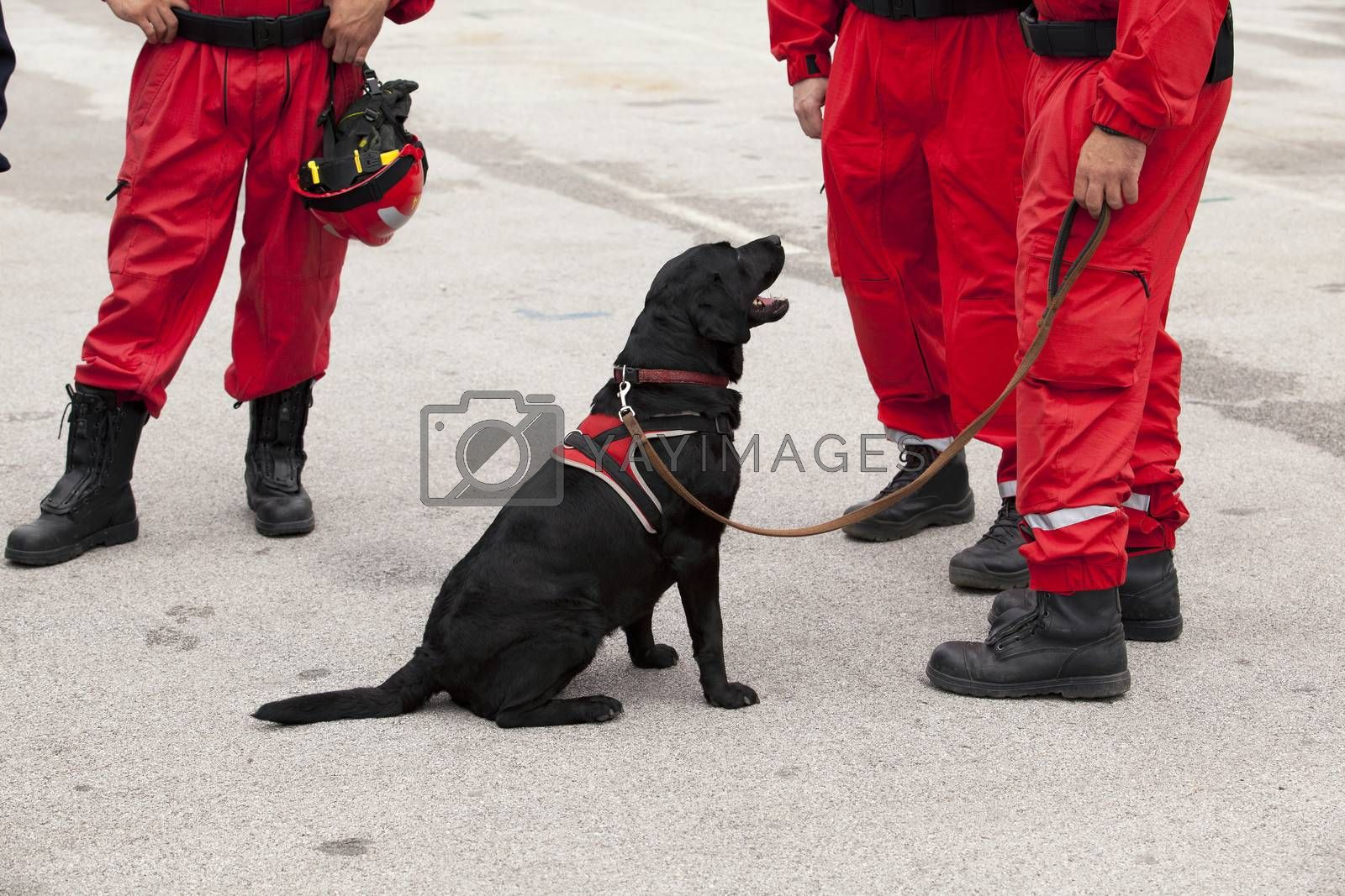 Royalty free image of Rescue dog by wellphoto