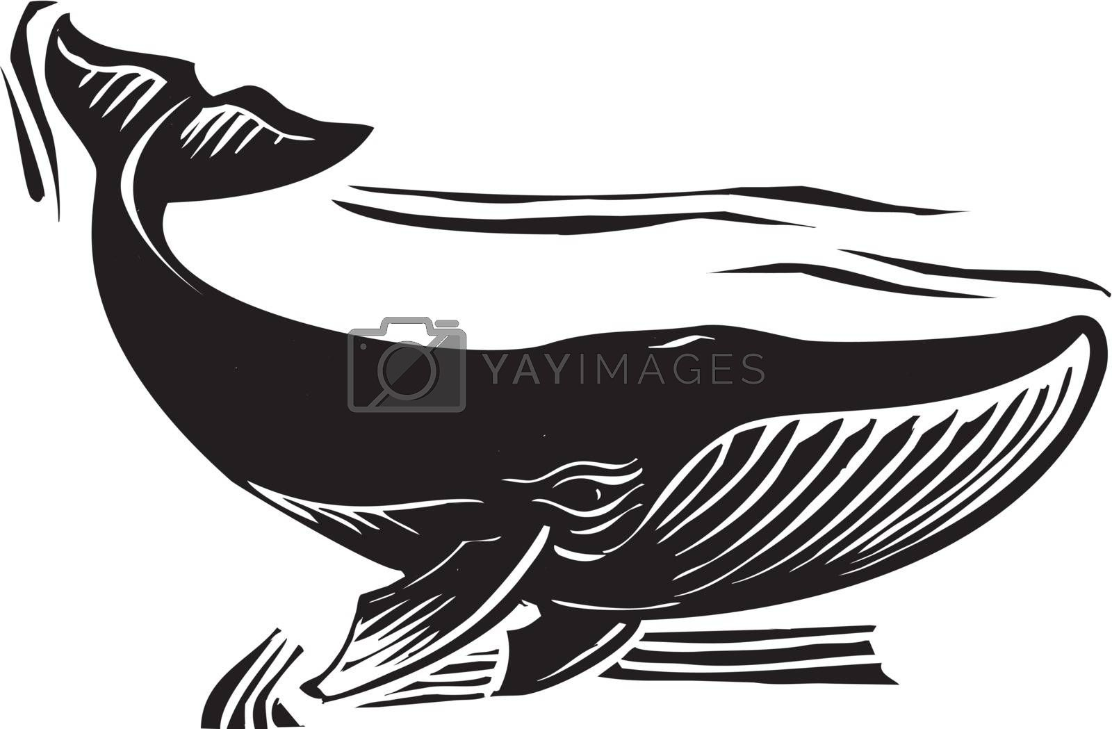 Woodcut style baleen whale flipping its tail