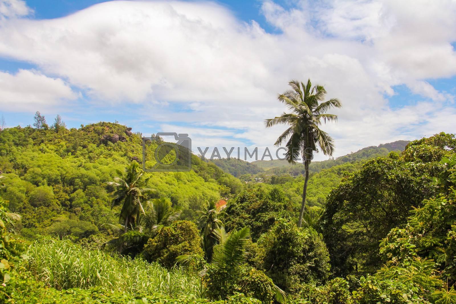 Palm tree on tropical island at Seyshelles