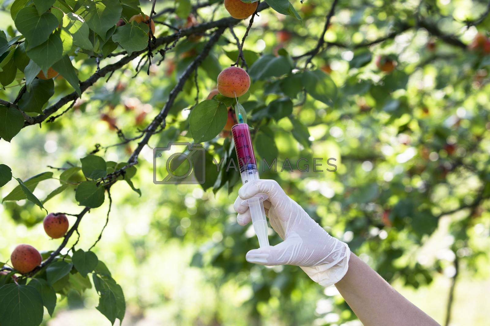 Pesticide injected in a fruit