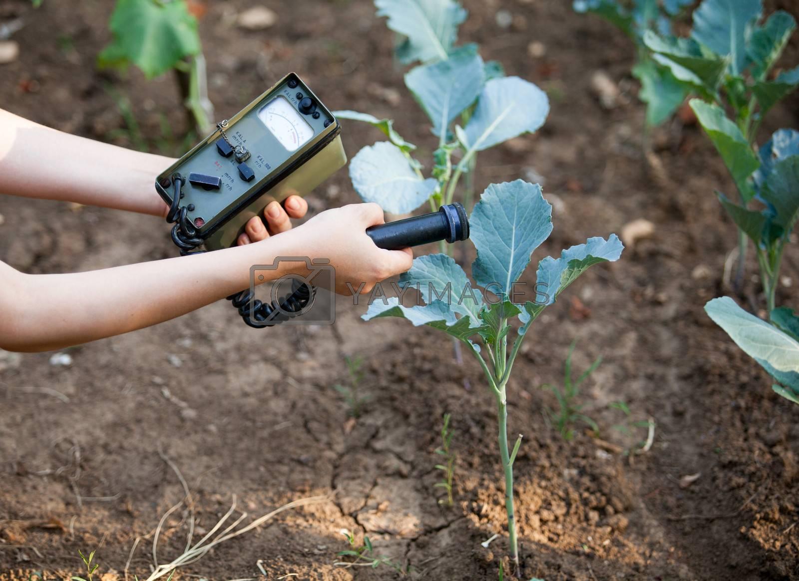 Measuring radiation levels of vegetables