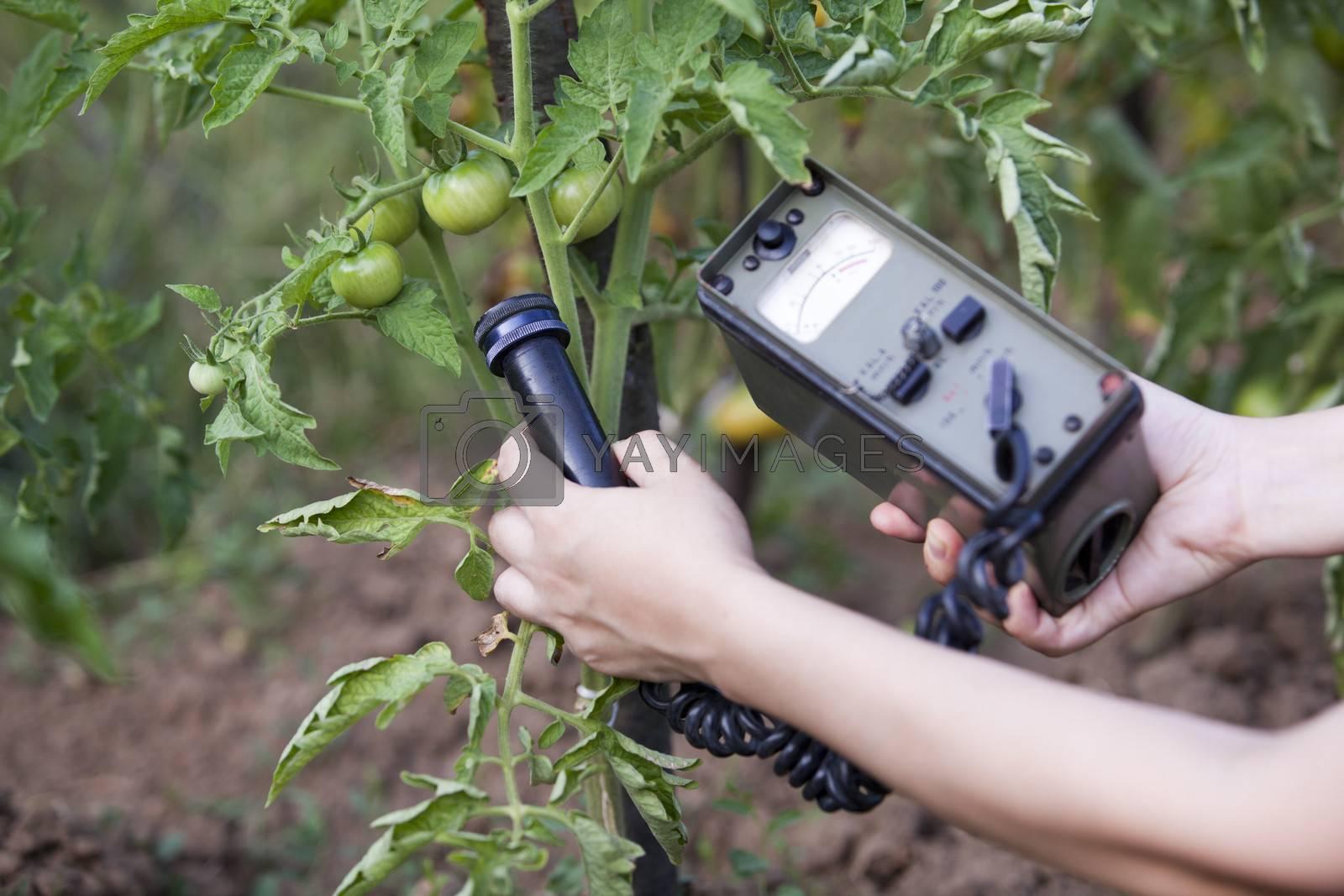 Measuring radiation levels of tomato