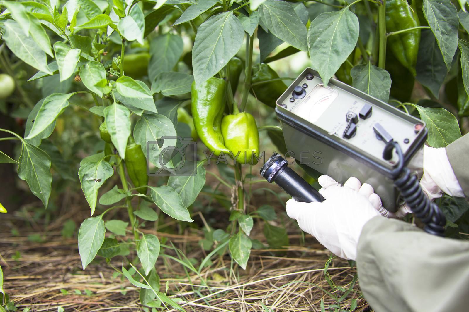 Measuring radiation levels of pepper