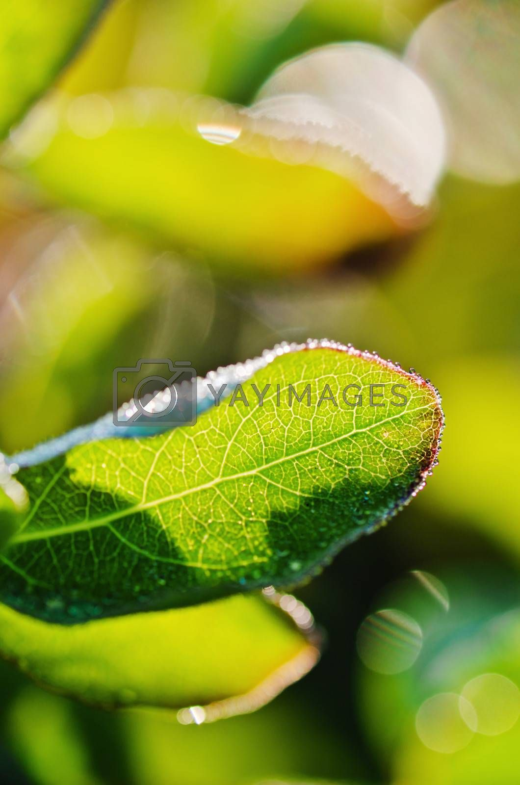 Morning dew drops on the leaves of plants, close-up