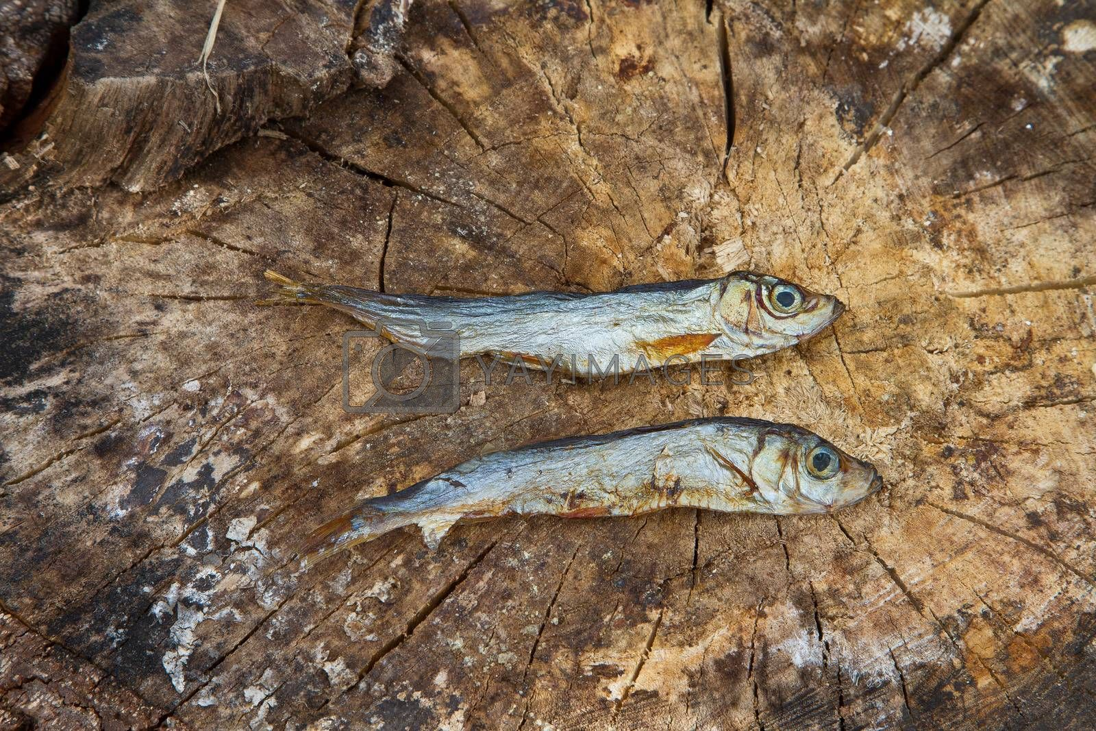 Two small dried fishes on  wood tree trunk